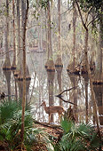WLD 13 BA0008 01
