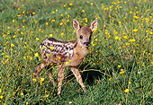 WLD 13 GL0001 01