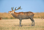 WLD 13 GL0002 01