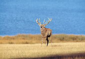 WLD 13 GL0004 01