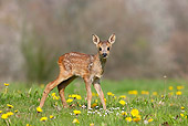 WLD 13 GL0005 01