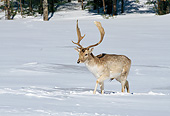 WLD 13 GL0009 01