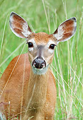 WLD 13 GR0013 01