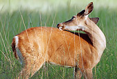 WLD 13 GR0014 01