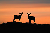 WLD 13 KH0010 01
