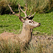 WLD 13 KH0012 01