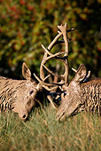 WLD 13 KH0014 01