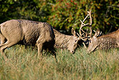 WLD 13 KH0016 01