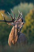 WLD 13 KH0023 01