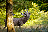 WLD 13 KH0025 01