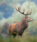 WLD 13 KH0029 01