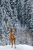 WLD 13 KH0041 01