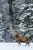 WLD 13 KH0042 01