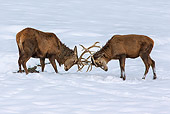 WLD 13 KH0045 01