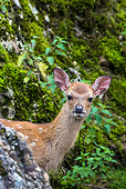 WLD 13 KH0046 01