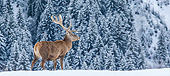 WLD 13 KH0048 01