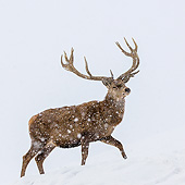 WLD 13 KH0049 01