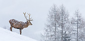 WLD 13 KH0051 01