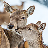 WLD 13 KH0055 01