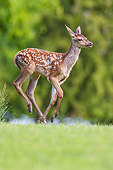 WLD 13 KH0056 01