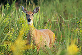 WLD 13 LS0003 01