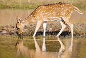 WLD 13 MC0009 01