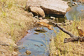 WLD 13 MC0010 01