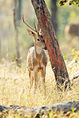 WLD 13 MC0012 01