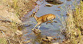 WLD 13 MC0016 01