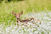 WLD 13 MC0018 01