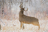 WLD 13 RF0060 01