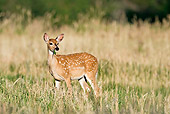 WLD 13 RF0062 01
