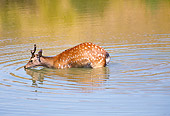 WLD 13 RK0005 01