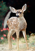 WLD 13 RK0010 07
