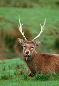 WLD 13 RK0049 02