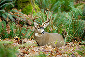 WLD 13 TL0025 01