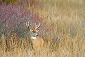 WLD 13 TL0027 01