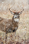 WLD 13 TL0029 01