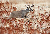 WLD 13 TL0030 01
