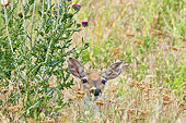 WLD 13 TL0032 01
