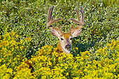 WLD 13 TL0033 01
