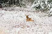 WLD 13 TL0037 01