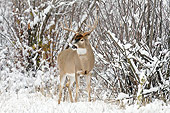 WLD 13 TL0039 01