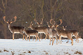 WLD 13 WF0003 01
