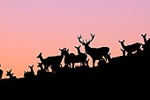 WLD 13 WF0004 01