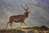WLD 13 WF0008 01