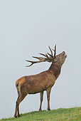 WLD 13 WF0012 01