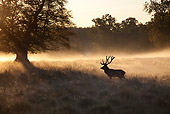 WLD 13 WF0013 01