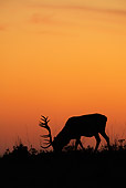 WLD 13 WF0016 01
