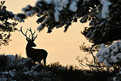 WLD 13 WF0018 01